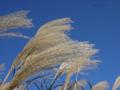 「秋の風景。日曜日の青空。」