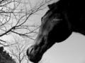 「桜の木の枝と愛馬の冬のポートレート」