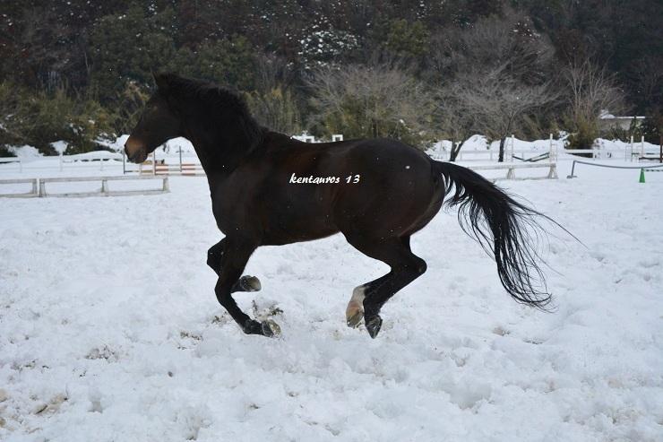 「宙に浮く愛馬」