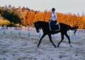「愛馬の速歩、Ⅱ」