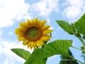 「小さな太陽」