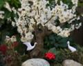 ミニチュアの世界:梅の盆栽。