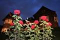 ライトアップされた旧古河庭園の洋館とバラ。