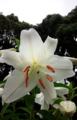 今日出会った花。