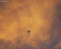 黄金を背景に飛ぶ飛行機。