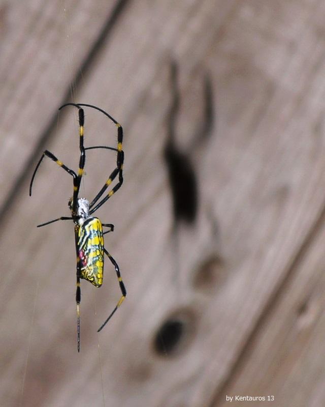 「蜘蛛と影、Ⅰ」