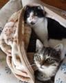 乗馬クラブの兄弟子猫。成長フォト日記。
