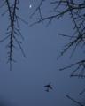 三日月と飛行機からなる夜空の風景。