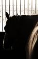 乗馬クラブの日常。眠る馬。