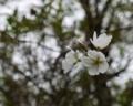 桜が咲いているのを発見!