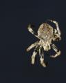 夜空を背景にポーズをとる蜘蛛