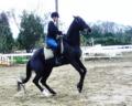 休日のトレーニング。愛馬の演技