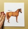 """今日の小さな絵:""""Chestnut Horse"""""""
