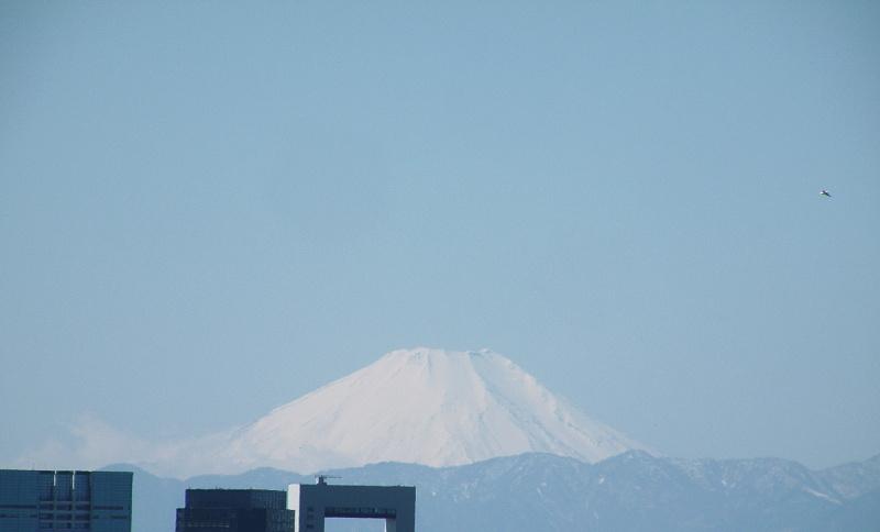 日曜日の富士山と一羽の鳥