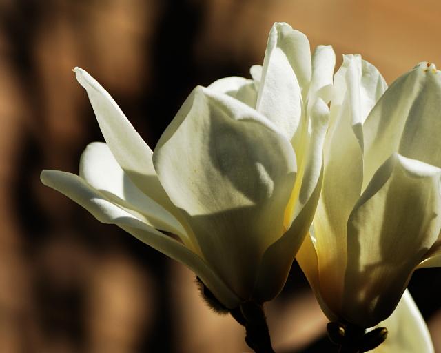 終わった季節の花