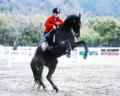 愛馬のダンス