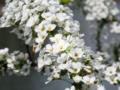 この小さな白い花でもこの季節が感じる