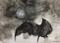 """A bat and Full Moon 2017"""