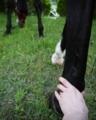 愛馬との癒しタイム
