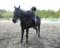 今日も暑さに負けないで愛馬と頑張りました。