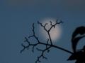 月のアーカイブからの一枚。おやすみなさい!