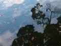 水面に舞う落ち葉