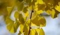 黄金の暖簾