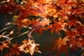 残っている都内の紅葉を追いかけて。