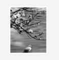 「白い花とカモメ」