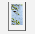 「小鳥と新緑からなる今日の風景」
