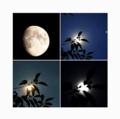 Moon 240618