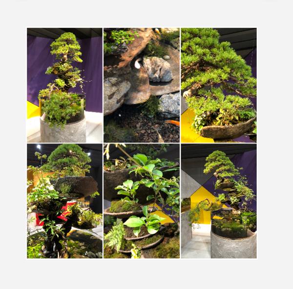 盆栽とアクアリウムin 武蔵小杉、Grand Tree