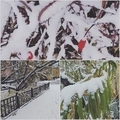 故郷の初雪。