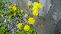 [HF]tiny flower