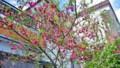 [HF]tree flower