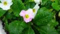 [HF]flower