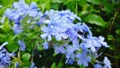 ブルーの美しい花