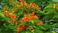 マメの木の珍しい花