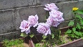 道端にきれいな花のプランター