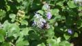 黒いミツバチと海岸の花