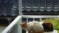 猫さん&ネコネコ君