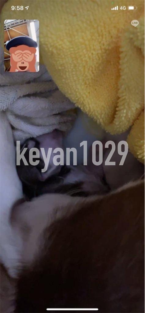 f:id:Keyan_husky:20210519104947j:image