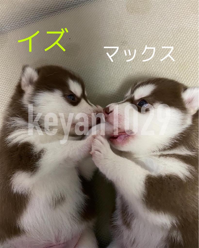 f:id:Keyan_husky:20210604163935j:image