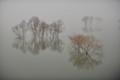Fog elusive 霧深い月夜 北海道石狩郡当別町青山 当別ダム・ふくろう湖