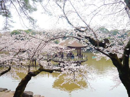 f:id:Kimono:20090405134409j:image