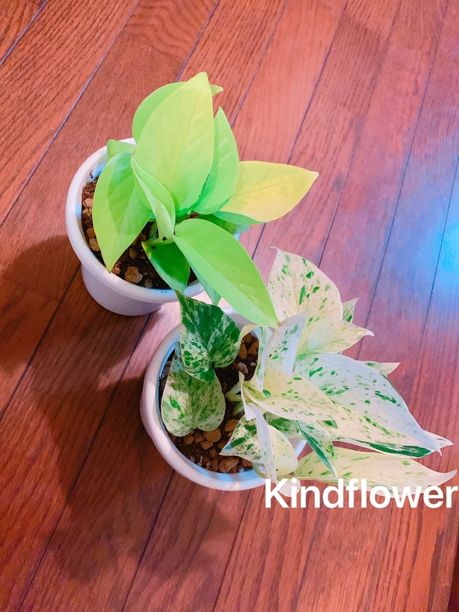 f:id:KindFlower:20190523002104j:plain