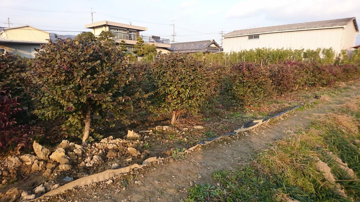 f:id:Kinokawaryokusan:20200113134341j:plain