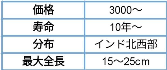f:id:Kirihuki:20200425182955j:image