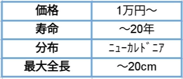 f:id:Kirihuki:20200517224051j:image