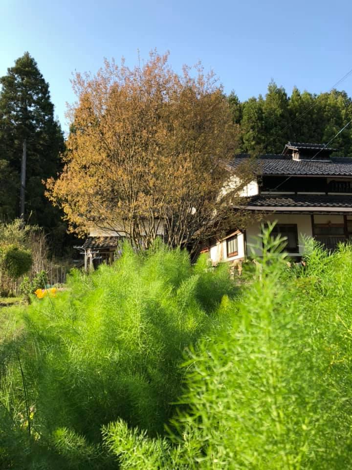 f:id:KishimotoTaro:20200510111627j:plain